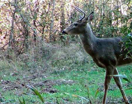 Trail Camera Pictures