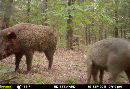 Trail Camera Photo
