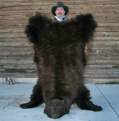 Wyoming Bear