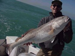 Huge Redfish